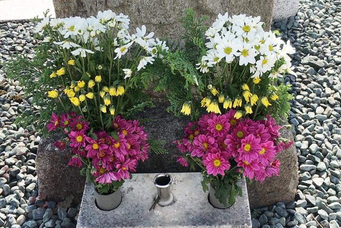 小菊の里・生産高日本一