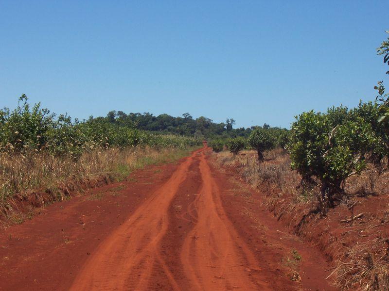 珈琲栽培に適したブラジル高原テラローシャ