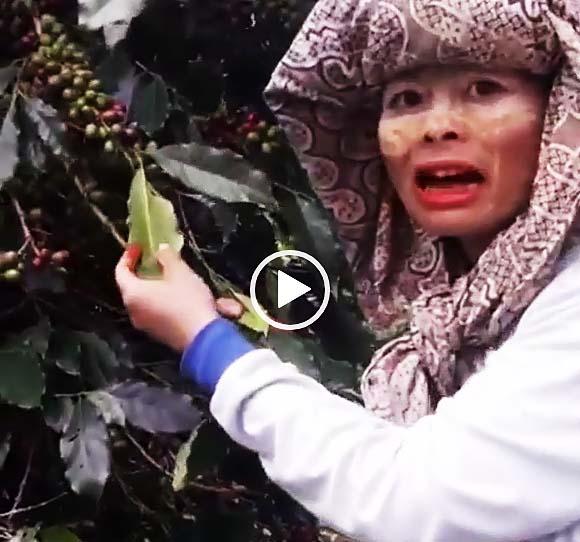 インドネシア女性珈琲生産者