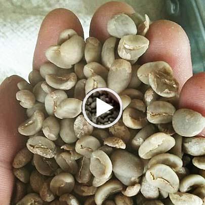 スマトラ式乾燥マンデリン