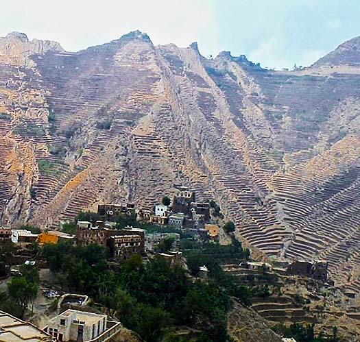 世界最古珈琲産地イエメンモカ
