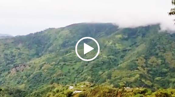 ジャマイカ・ブルーマウンテンコーヒー生産地区