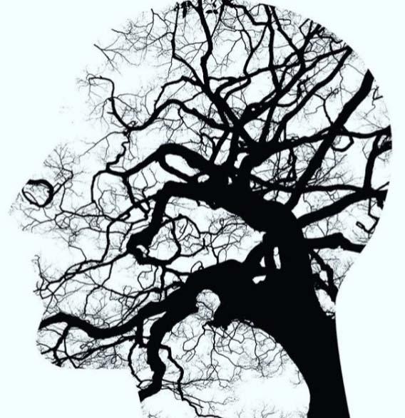 トリゴネリンは脳神経細胞を再生する