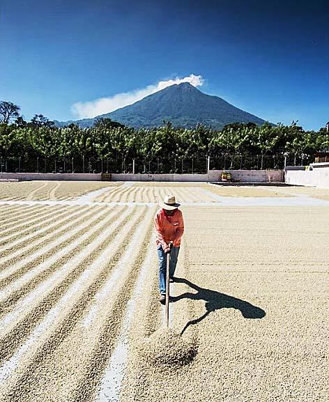グアテマラ珈琲味の特徴